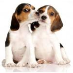 Kleine honden